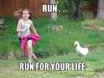RUN ,  RUN FOR YOUR LIFE