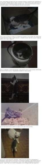 И так, прошла неделя. За неделю котик (да, он мальчик) отожрался столовских котлет, припасённых на лето для кошки, прибавил в весе аж ЗООгр и стал весить 1кг. Худоба пропала, шерсть заблестела и он почувствовал себя полноправным хозяином. Поскольку спать с ним в постели всё же опасно (можно ненарок