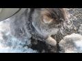 Спасли котенка.,People & Blogs,,Кошка вмерзла в лед.