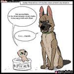 rVN - and Brutus J3) @pet_foolery