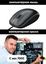компьютерная мышь компьютерная крыса