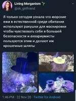 V Living Morganism @ok_girlfriend Я только сегодня узнала что морские ежи в естественной среде обитания используют ракушки для маскировки чтобы чувствовать себя в большей безопасности и аквариумисты пользуются этим и делают им крошечные шляпы 1:46 РМ • 22 Nov 20 • Twitter for Android