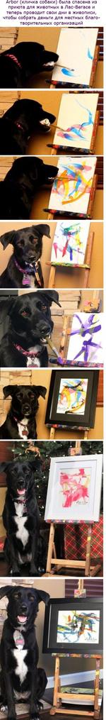 Arbor (кличка собаки) была спасена из приюта для животных в Лас-Вегасе и теперь проводит свои дни в живописи, чтобы собрать деньги для местных благотворительных организаций
