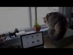 Атака злой кошки,Comedy,,